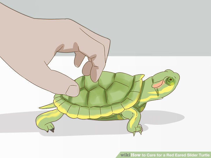 Spend time with your turtle.