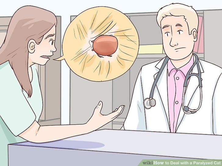 Geben Sie Ihrem Tierarzt so viele Informationen wie möglich.