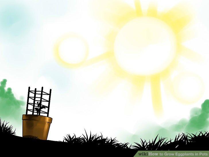 Stellen Sie Ihren Topf an einem sonnigen Ort auf.