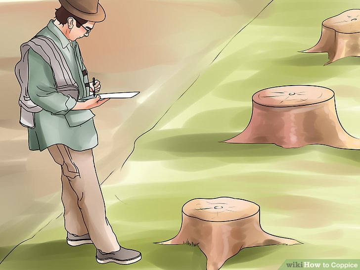 Slice the stumps at an angle to promote water runoff.