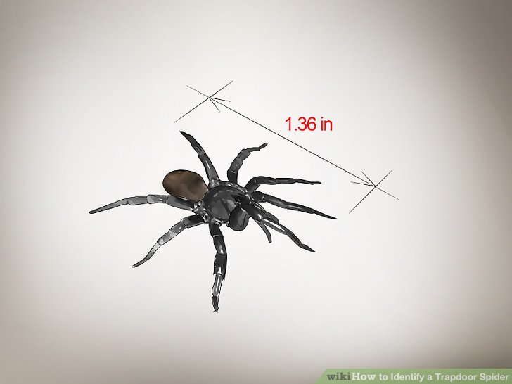 Take note of the spider's length.