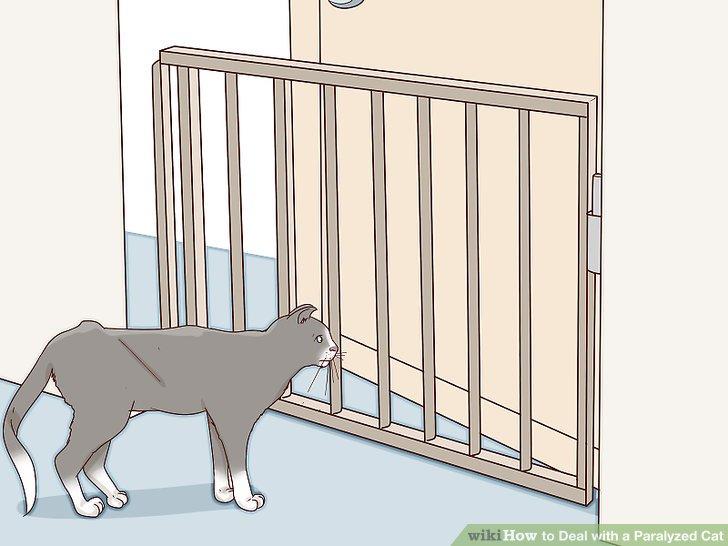 Blockieren Sie Bereiche, die eine Gefahr für Ihre Katze darstellen könnten.