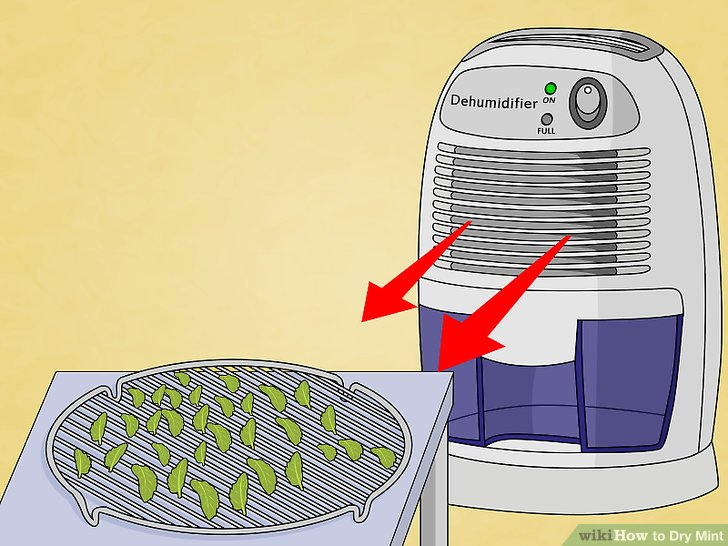 Verteilen Sie die Minzblätter auf einem Backblech.