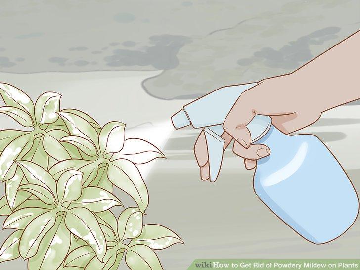 Testen Sie jedes Spray an Ihrer Pflanze, bevor Sie es verwenden.