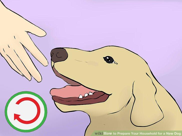 Fragen Sie im Tierheim nach dem Futter- und Futterplan Ihres Hundes.