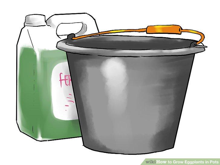 Fügen Sie alle ein bis zwei Wochen einen flüssigen Dünger hinzu.