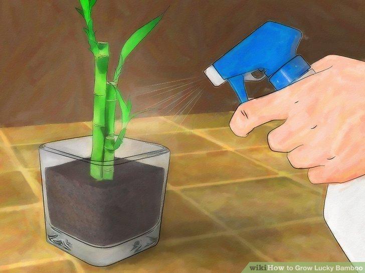 Gießen Sie die Pflanze sorgfältig.