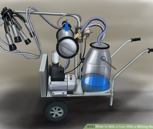 Image Titled Milk A Cow With A Milking Machine Step 16