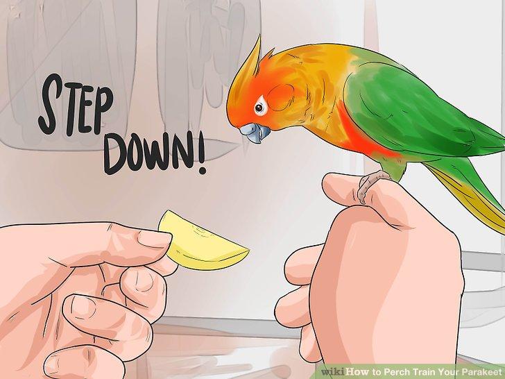 """Bringen Sie Ihrem Vogel den Befehl """"Rückschritt""""."""