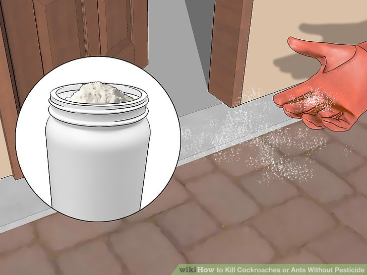 Sprinkle diatomaceous earth around your home.