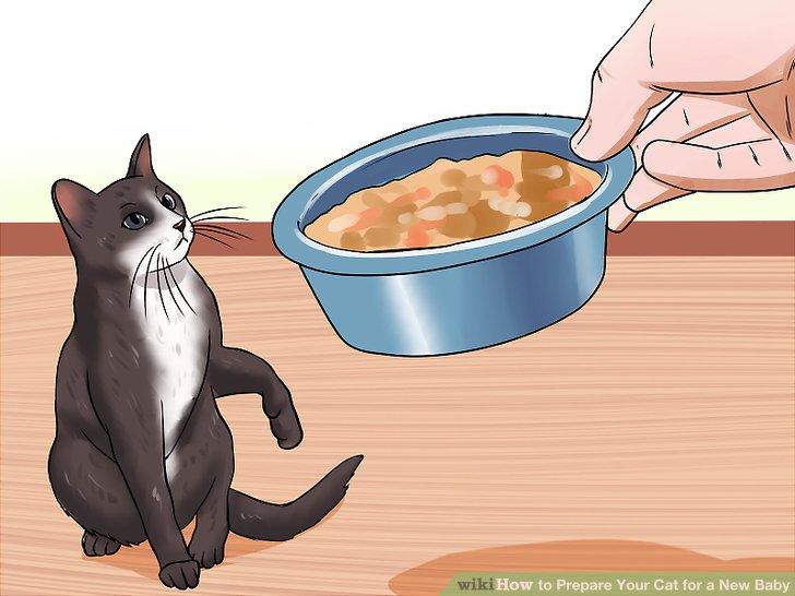 Vermeiden Sie die Reinigung der Katzentoilette.
