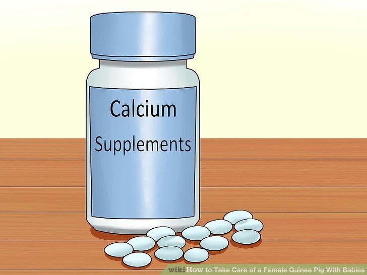 Ergänzen Sie die Ernährung der Mutter Meerschweinchen mit Kalzium.