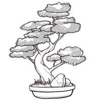 Cmo dibujar un rbol Bonsai: 8 pasos (con fotos)