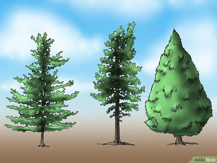 3 Cara untuk Menanam Pohon Pinus  wikiHow