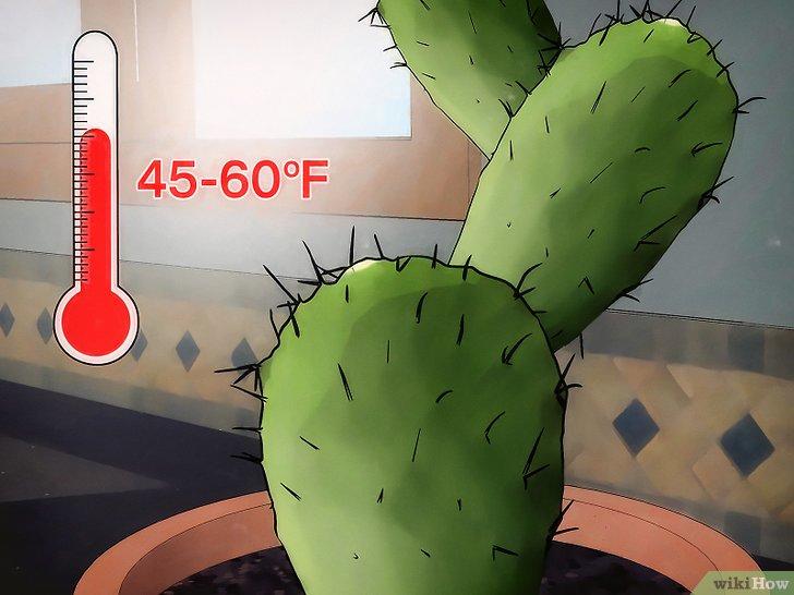 صورة عنوانها Save a Dying Cactus Step 10