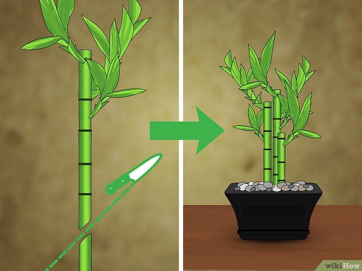 Come Tagliare Il Bambù 9 Passaggi Illustrato
