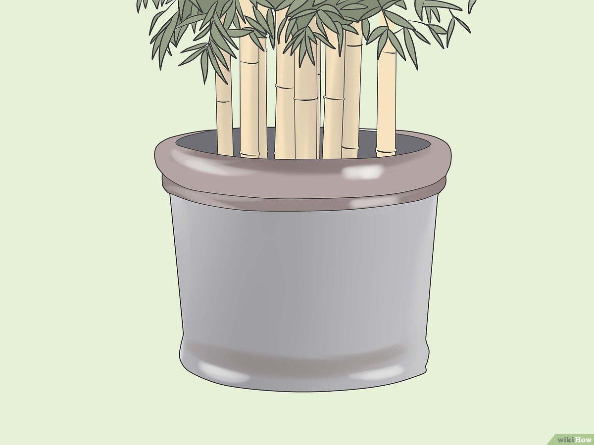 Come Sbarazzarsi Del Bambù 8 Passaggi Illustrato