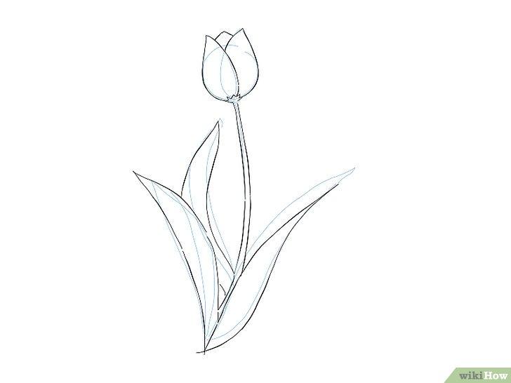 Lukisan Flora Yang Mudah Digambar | Cikimm.com