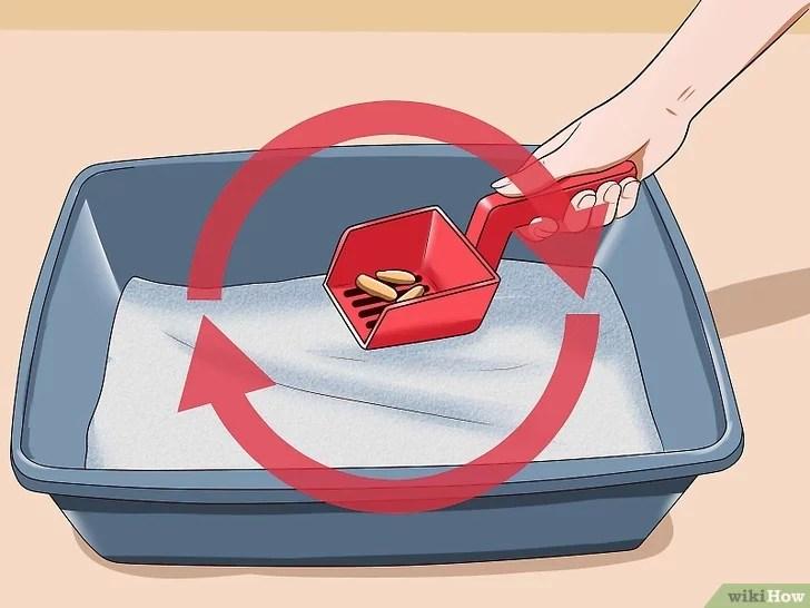 Immagine titolata Remove Cat Urine Smell Step 14