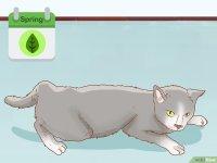 Cmo saber si una gata est preada: 12 pasos