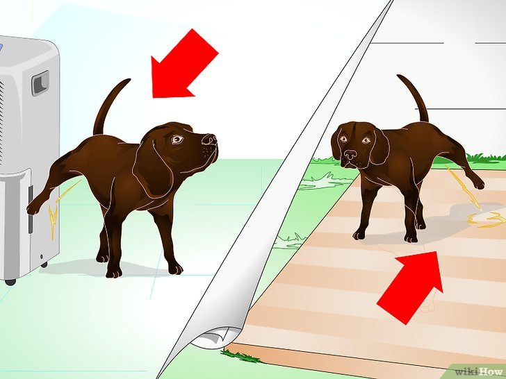 Das Markierverhalten Von Hunden Unterbinden Wikihow