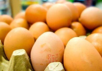 Telur Tercemar Fipronil Ditemukan Di Hongkong