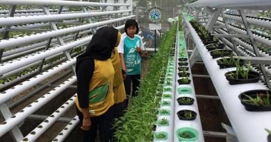 Ayo Wisata Ke Kebun Hidroponik , Destinasi Agrowisata Baru di Jember