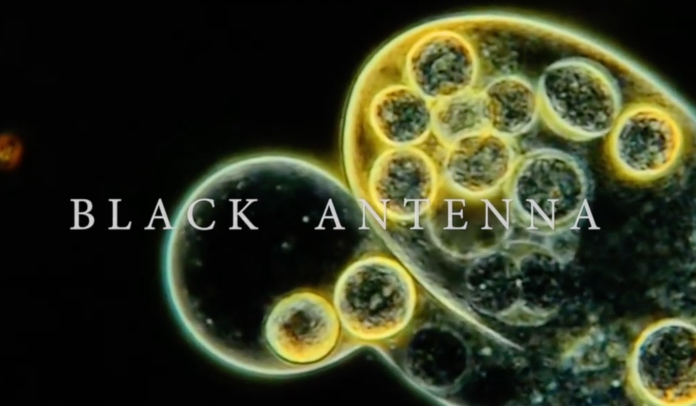 Black Antenna Alice In Chains