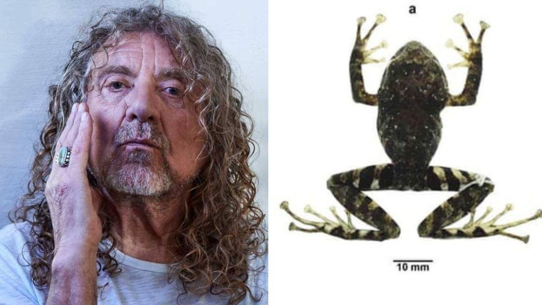 Robert Plant comenta espécie de sapo nomeada como Led Zeppelin