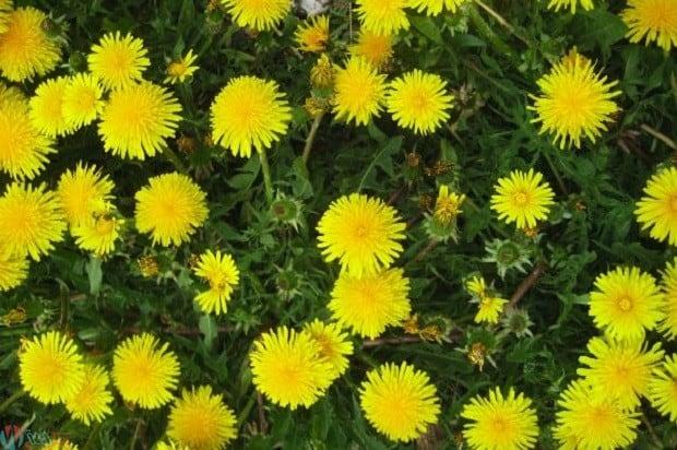 علاج التهاب المفاصل بالاعشاب 3
