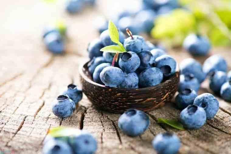 العنب البري