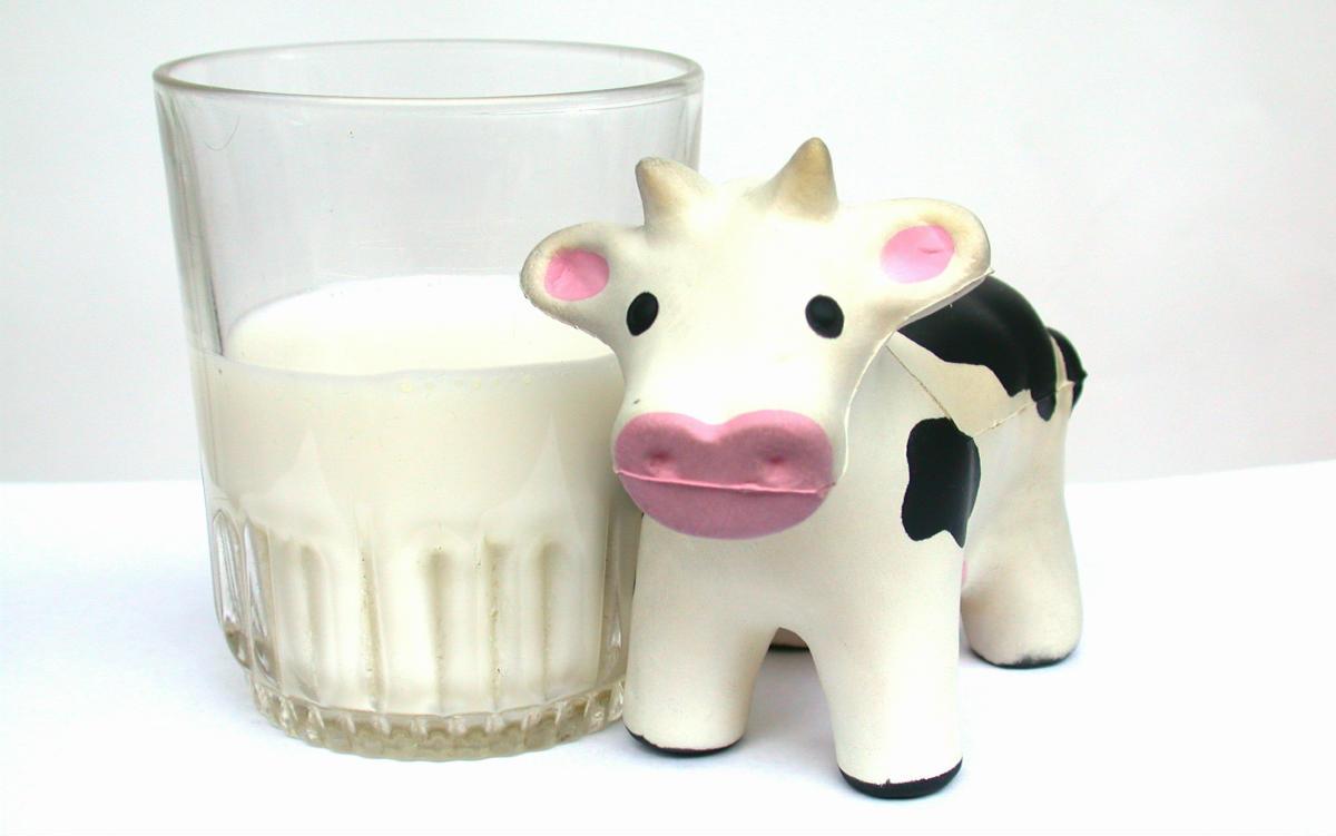 """De Obsessie Van De Spanjaarden Voor Het Gebruik Van Het Woord """"leche"""" Of Melk In Hun Taal"""