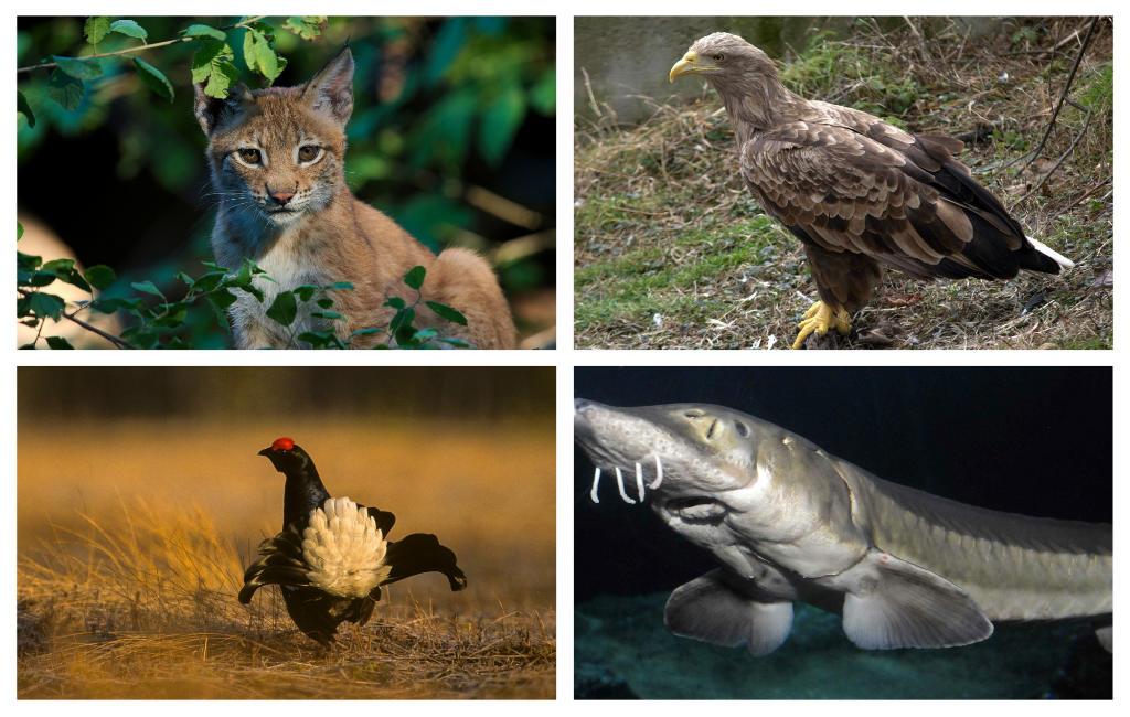 32 uitgestorven inheemse soorten flora en fauna in Spanje