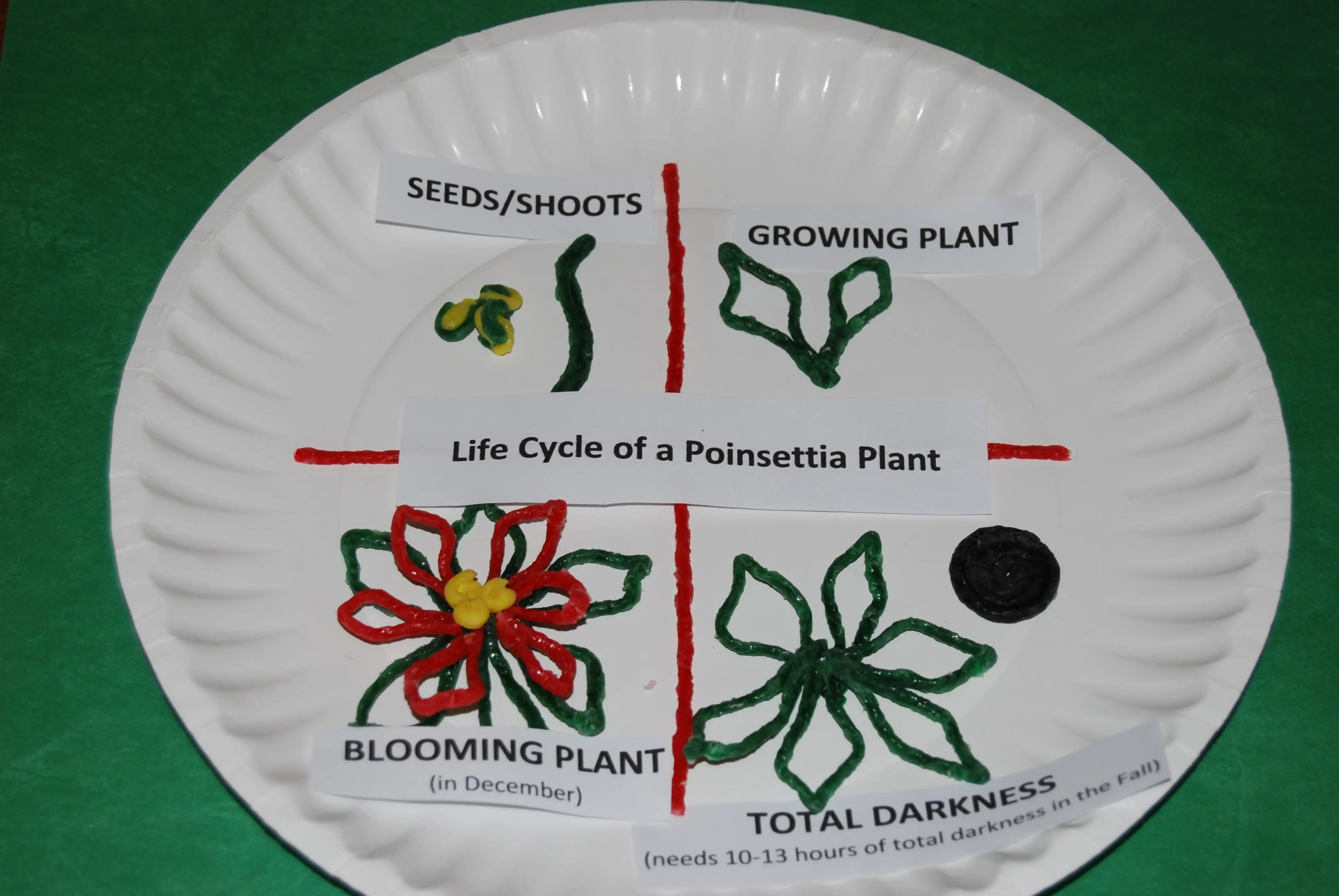 Wikki Stix 3 D Life Cycle Of A Poinsettia Craft For Kids