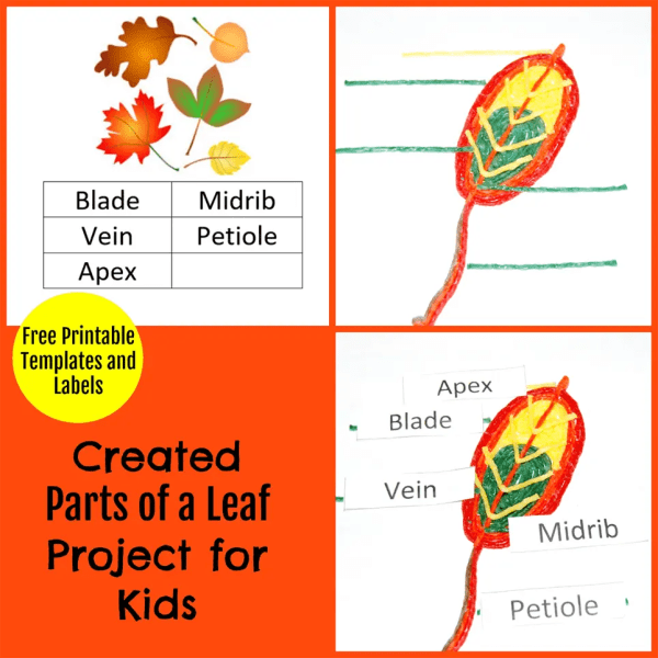 Created Parts Of Leaf Project Kids Wikki Stix