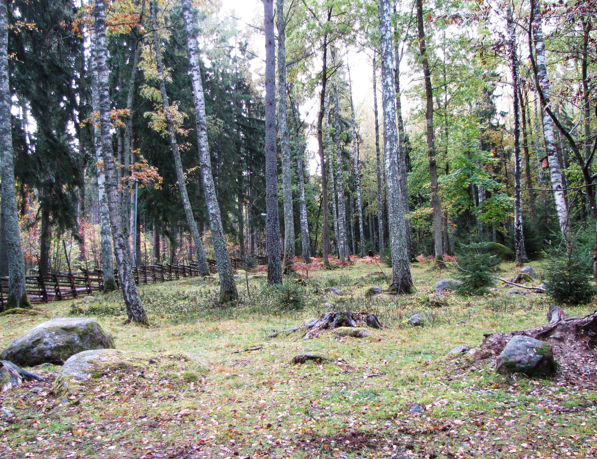 Naturreservat Gamla Linköping-Valla
