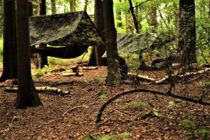 1 Day Woodland Survival & Bushcraft Course @ Wild Survivor
