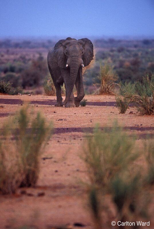 MEP The Elephants of Mali  WILD Foundation