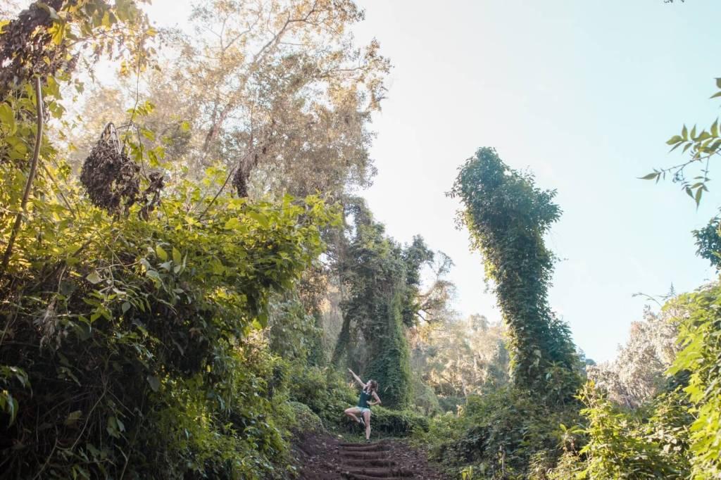 Dschungel am Vulkan San Pedro