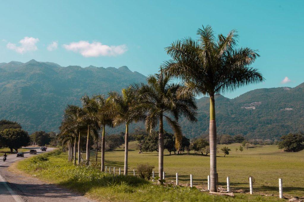 Huasteca Potosina Palmen