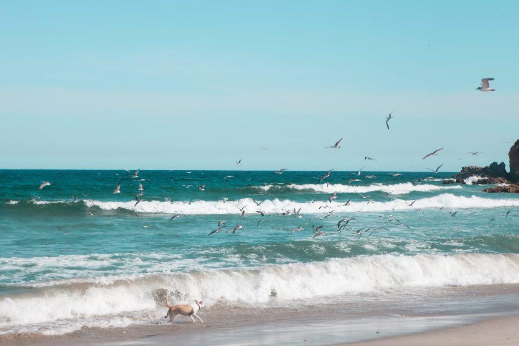 Strände von Oaxaca Vögel