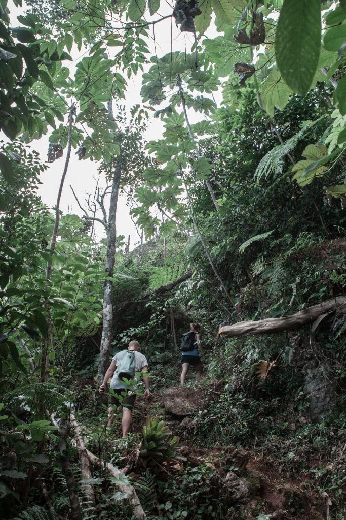 Wanderweg auf den El Yunque