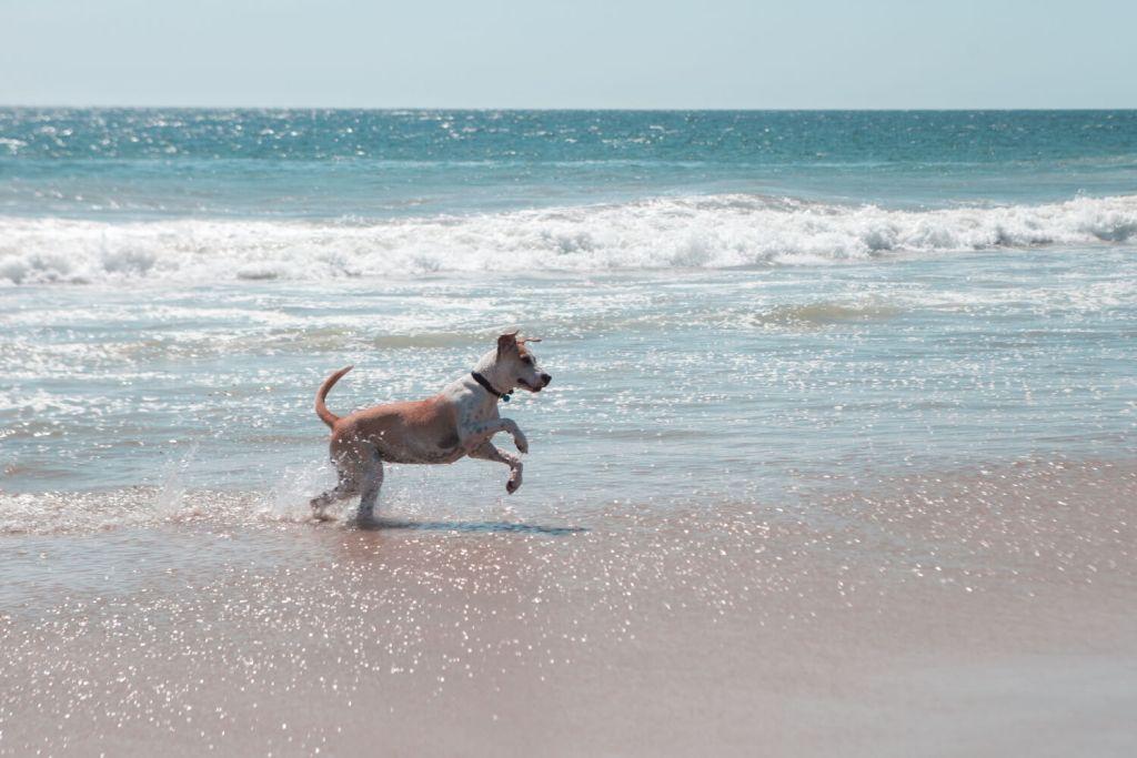 Einreise mit Hund nach Mexiko Meer