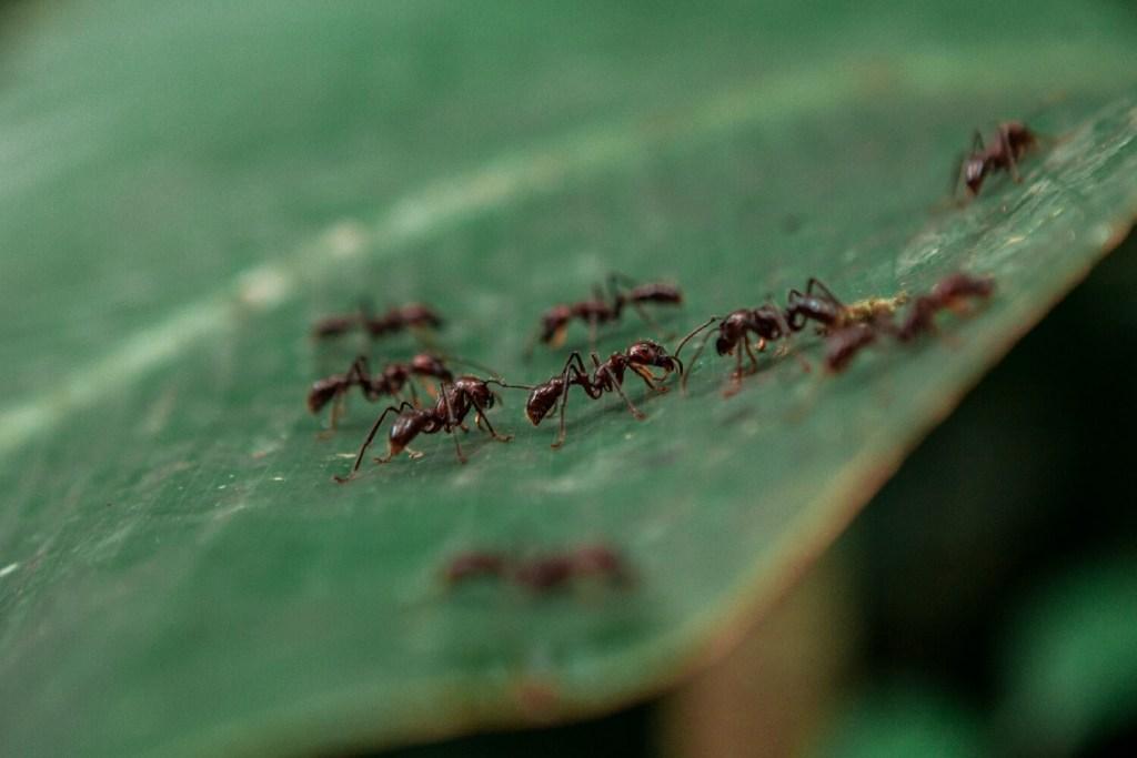 24 Stunden Ameisen