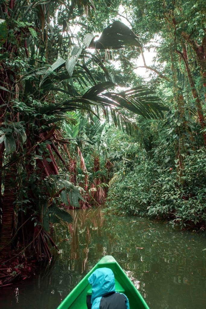 Dschungelfluss Costa Rica