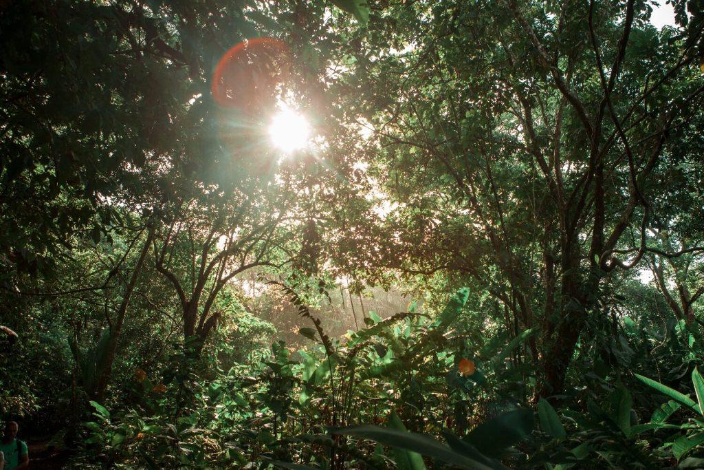 Tortuguero Nationalpark in Costa Rica Dschungel