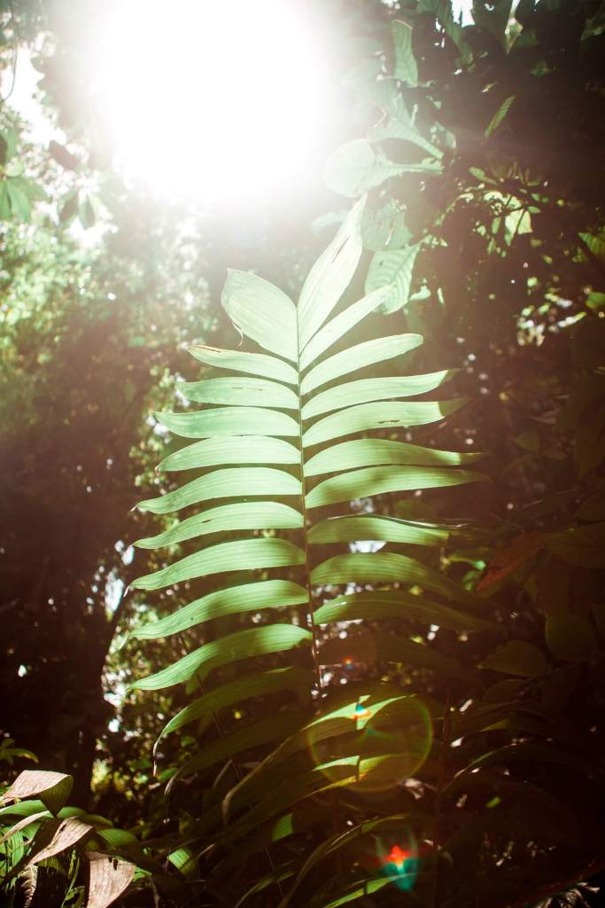 Palmblatt in der Sonne