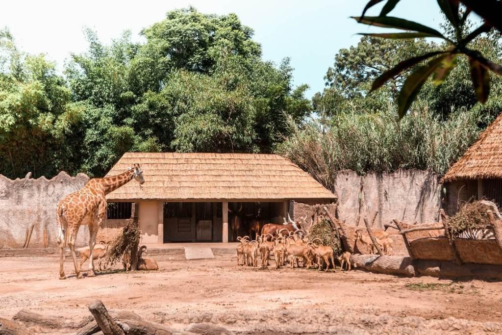 La Aurora Zoo in Guatemala City Afrika