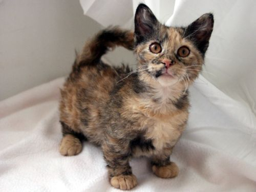 CUTE EXOTIC ANIMALS FOR SALE
