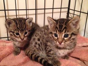 CATS FOR SALE WITH FREE DELIVERY WORLDWIDE